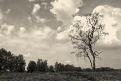 Witteveen02W